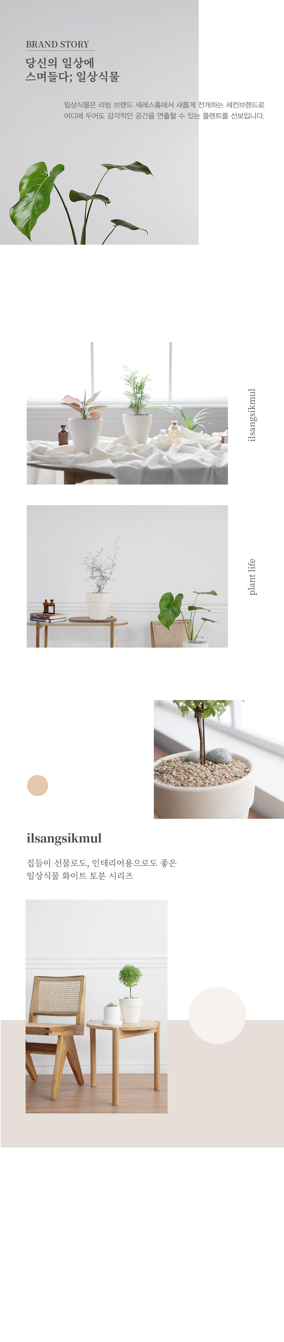 인테리어식물 집들이선물 실내공기정화식물 16종 모음 - 세레스홈, 40,000원, 허브/다육/선인장, 공기정화식물